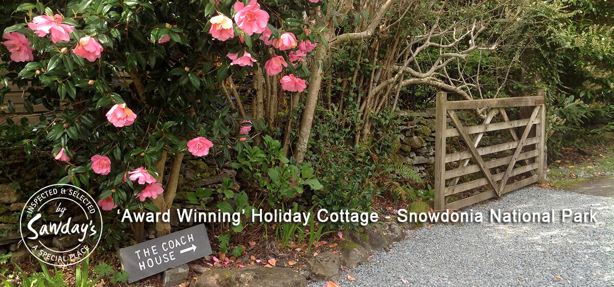 Your Holiday Begins - Beautiful camilias leading to The Coach House